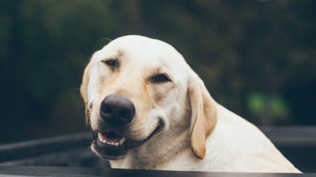 動物 コロナ 感染 犬 猫 ペット
