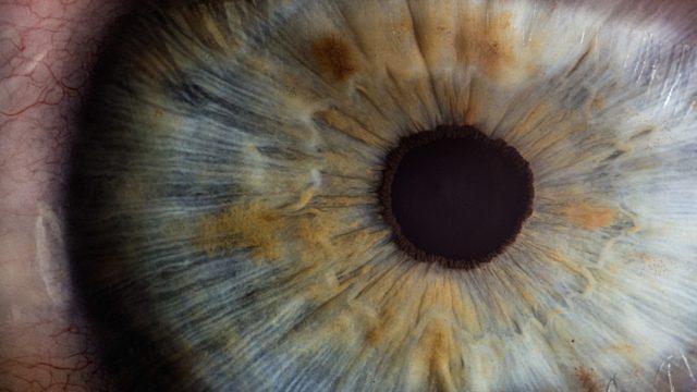 コロナ 結膜炎 初期 症状 目 感染