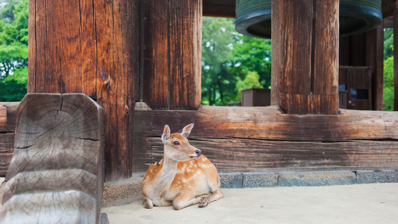 奈良市 コロナ 誰 どこ住み